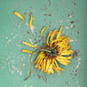Dead Suflower Poster