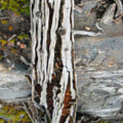 Dead Tree Above Tree Line I Poster
