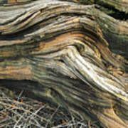 Dead Tree Textures Poster