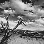 Dead Trees at Mesquite Dunes Poster
