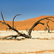 Deadvlei With Tree Poster