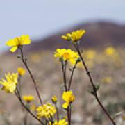 Death Valley Super Bloom 2016 Poster