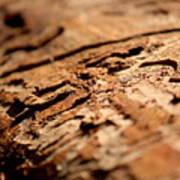 Debarked Tree Poster