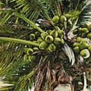 Debbie's Coconuts Poster