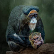 Debrazza's Monkey And Baby Poster