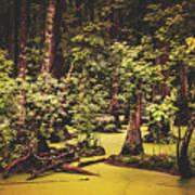 Decayed Vegetation - Run Swamp, North Carolina Poster