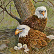 Decorah Eagle Family Poster