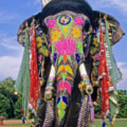 Decorated Indian Elephant Poster