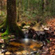 Deep Forest Creek Poster