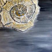 Deep Ocean Seashell Poster by Leslye Miller