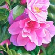Deep Pink Camellias Poster by Sharon Freeman