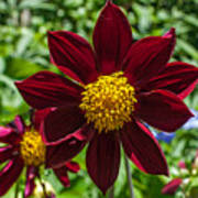 Deep Red And Yellow Flowers Poster