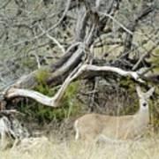 Deer 009 Poster