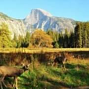 Deer And Half Dome Poster by Sandy L. Kirkner