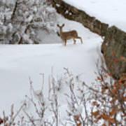 Deer At Castlewood Canyon Poster