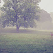Deer By Barn On A Foggy Morning Poster