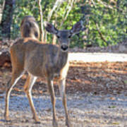 Deer Doe - 1 Poster
