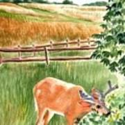 Deer Eating Leaves Poster