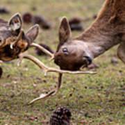 Deer Games Poster