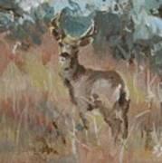 Deer In A Field Poster