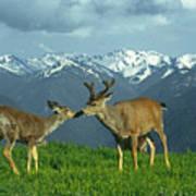 Ma-181-deer In Love  Poster