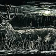 Deer In Moonlight Poster
