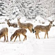 Deer In The Snow Poster