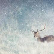 Deer In Winter Scene Poster