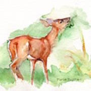 Deer Painting In Watercolor Poster