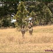 Deer Tails Poster