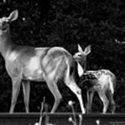 Deer Tracks Poster