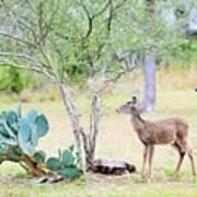 Deer19 Poster