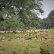 Deer48 Poster