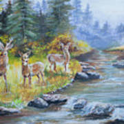 Deers At The Water Poster