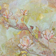 Delicate Magnolias Poster