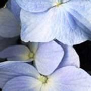 Delicate Petals Poster