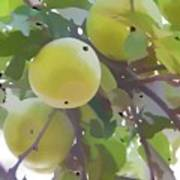 Delicious Yellow Apple In Summer Poster
