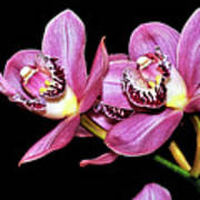 Delightful Orchid Poster