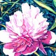 Delightful Peony Poster