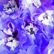 Delphinium Flowers Poster