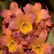 Dendrobium Oriental Smile Poster