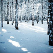 Dense Spruce Snowy Forest Poster