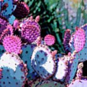 Desert Blush Poster