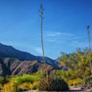 Desert Flowers In The Anza-borrego Desert State Park Poster