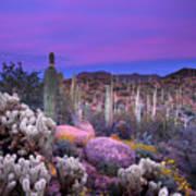 Desert Garden Poster by Eric Foltz