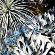 Desert Garden Poster