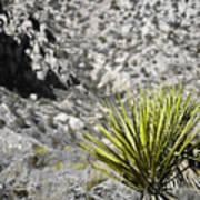 Desert Green Poster
