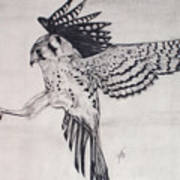 Falcon I Poster