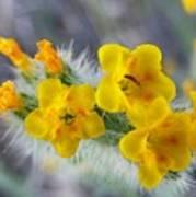 Desert In Bloom Poster