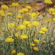 Desert Marigold Bouquet  Poster